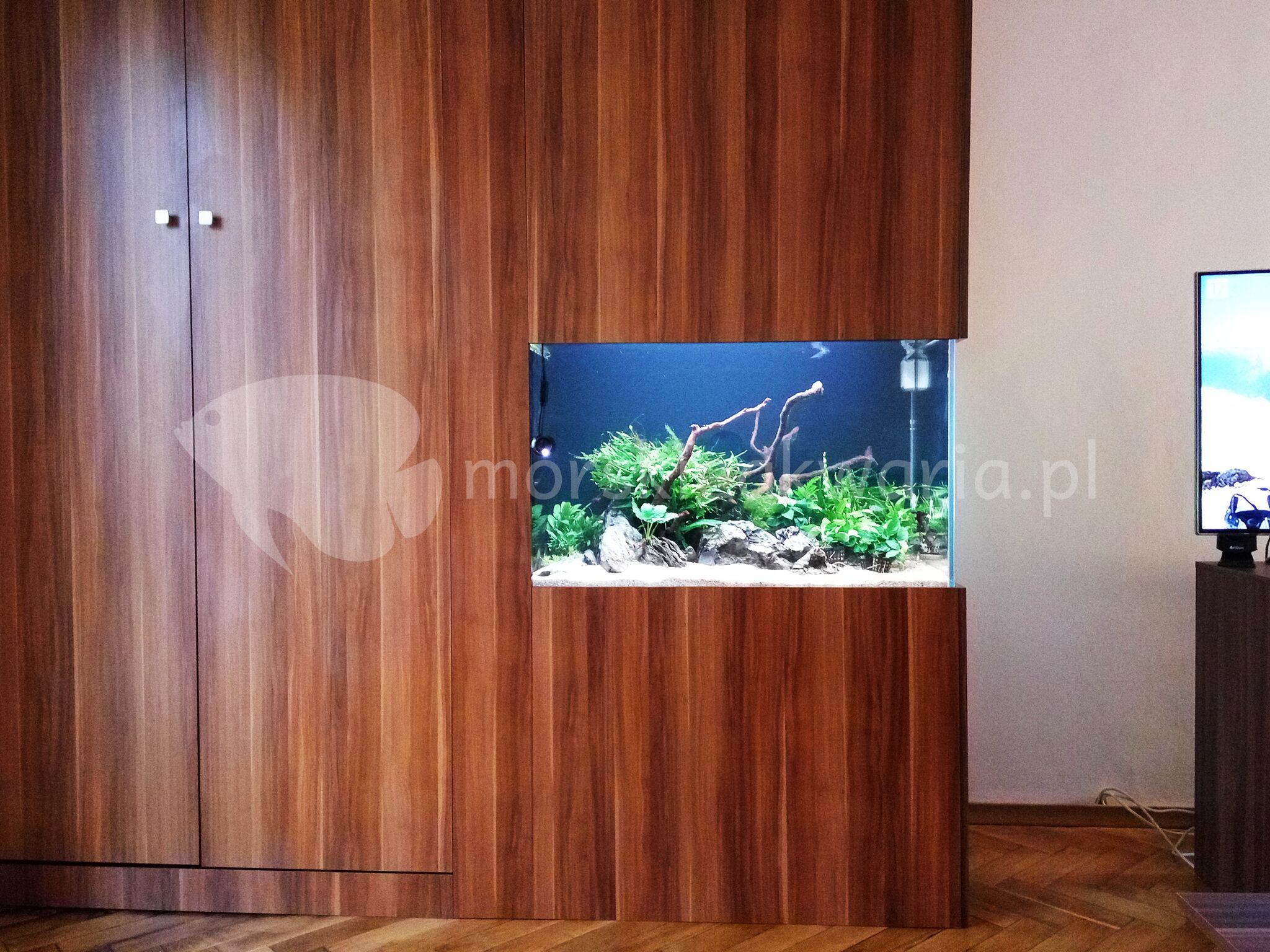 Akwarium naturalne 1