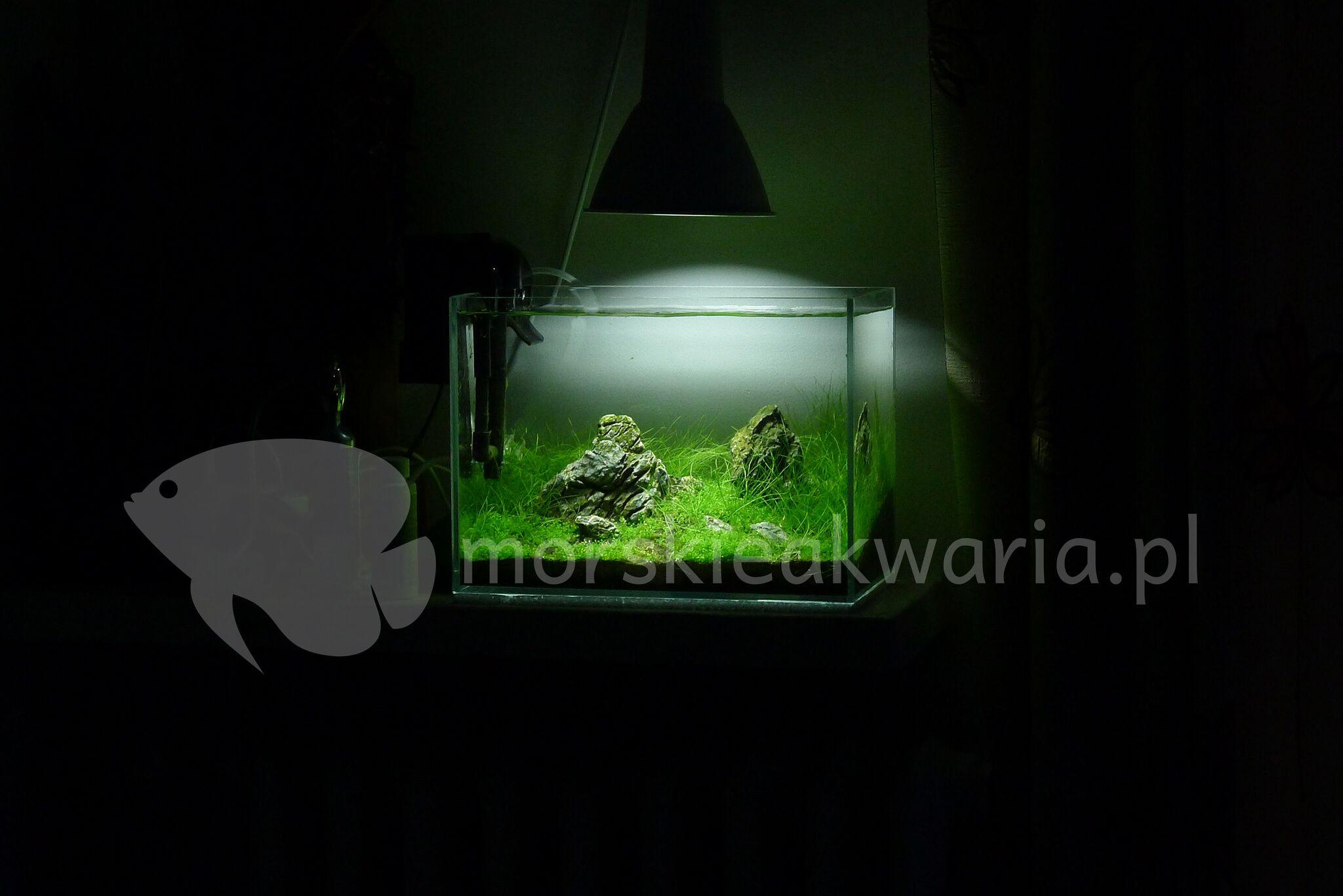 Nano akwarium naturalne 1