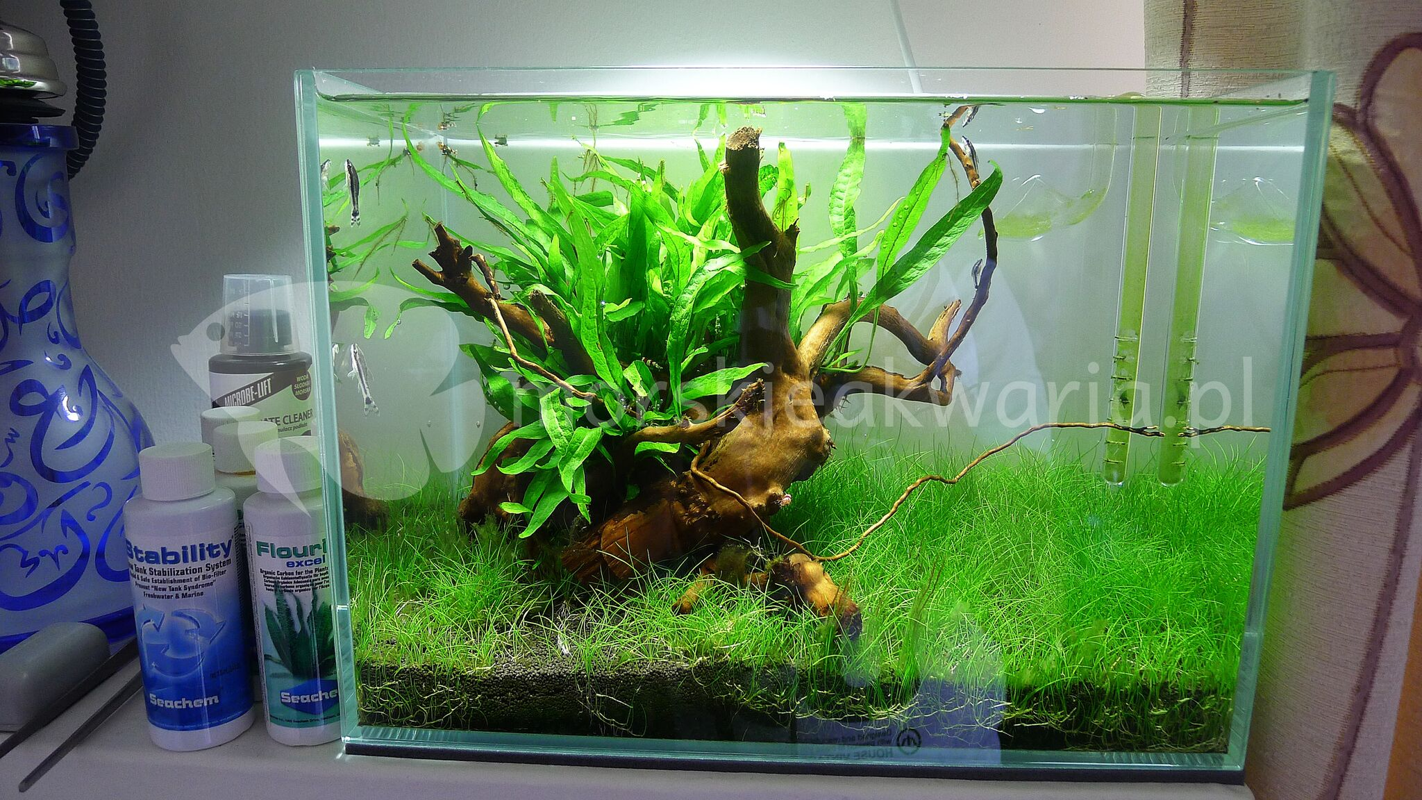 Nano akwarium naturalne 3