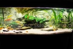 Akwarium bezobsługowe Malawi