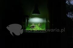 Nano akwarium naturalne