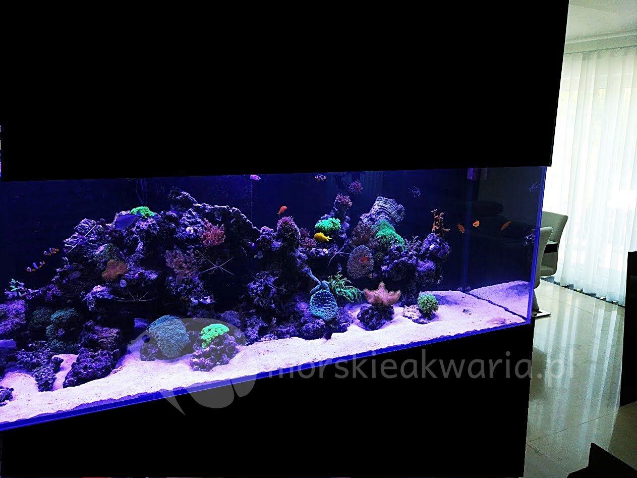Akwarium morskie Warszawa 1500l_preview
