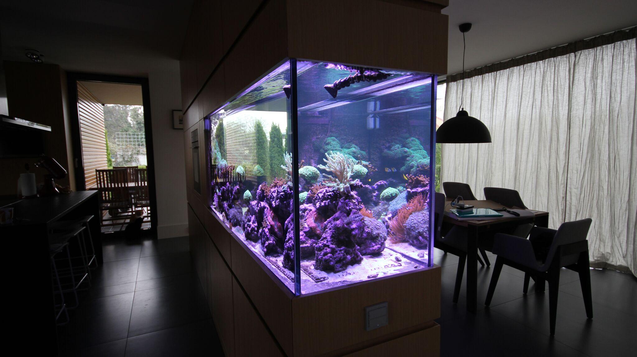 Akwarium-morskie-w-ścianie-4