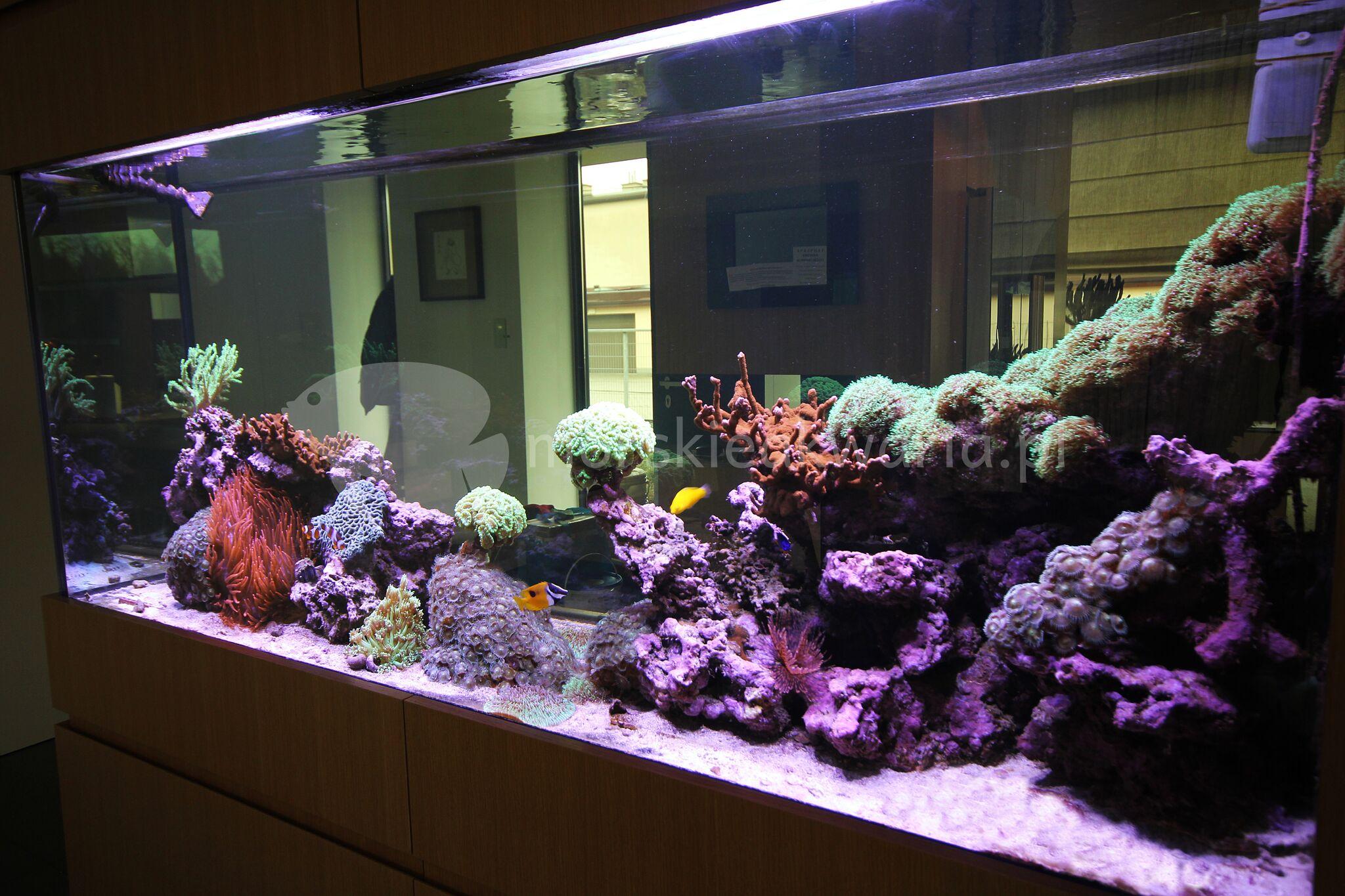 Akwarium-morskie-w-ścianie-5
