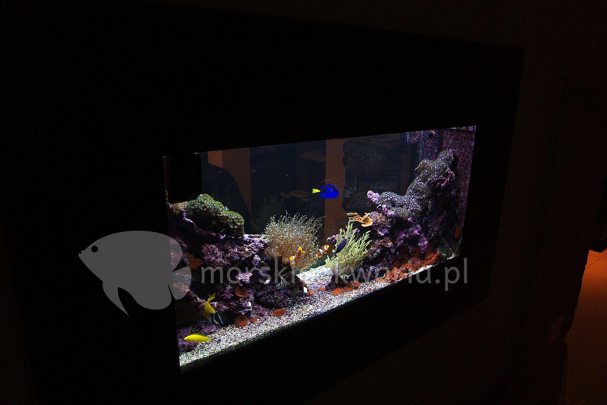 Akwarium-morskie-w-ścianie-8