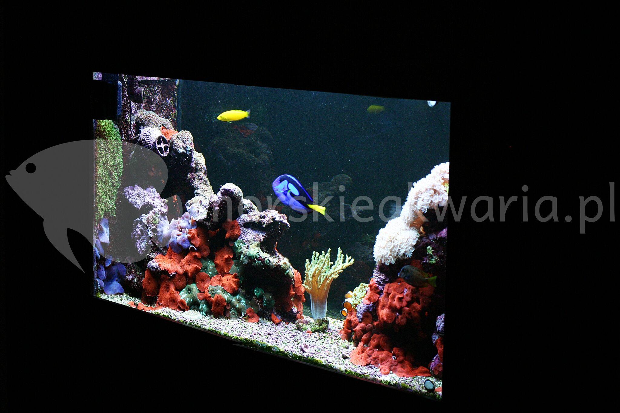 Akwarium-morskie-w-biurze-3