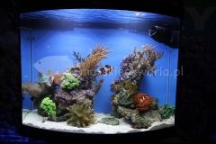 Akwarium-morskie-Wystawa-akwarystyczna-pierwsze-miejsce-1