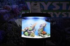 Akwarium-morskie-Wystawa-akwarystyczna-pierwsze-miejsce-2
