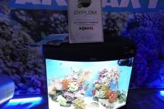 Akwarium-morskie-Wystawa-akwarystyczna-pierwsze-miejsce-4