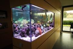 Akwarium-morskie-w-ścianie-1