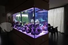 Akwarium-morskie-w-ścianie-2