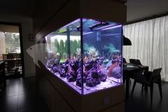 Akwarium-morskie-w-ścianie-3