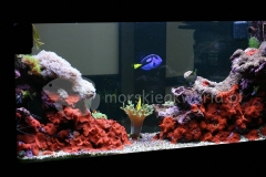 Akwarium-morskie-w-biurze-4