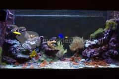 Akwarium-morskie-w-domu-2