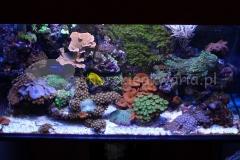 Akwarium-morskie-w-domu